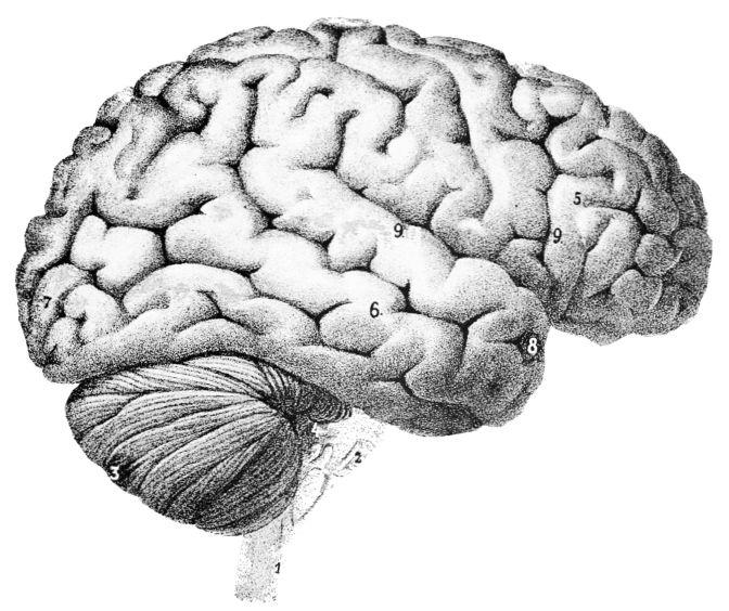 Brain Awareness Week 2018
